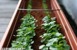 Eigener Anbau von Gemüse und mehr