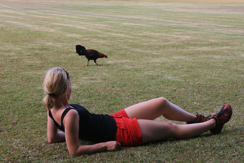 Kauai-Hühner