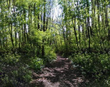 Waldbaden Achtsamkeit Gesundheit Entspannung